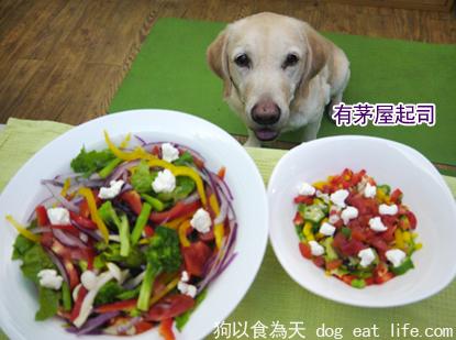 狗狗補充鈣質小點心『超簡單自製茅屋起司』