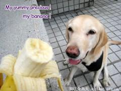"""大寶立志加入五月天的""""香蕉天團""""~"""