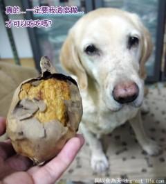 我祈禱~每天都有燒番薯可以吃!!!