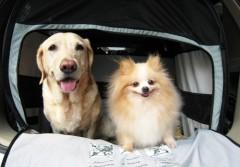 有肝臟病的狗狗需要多吃什麼食物?
