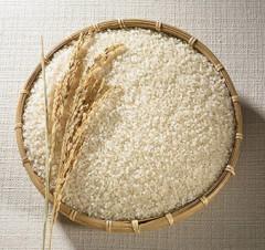 如何選購食米?