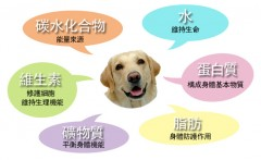 維持狗狗健康的6大營養素介紹