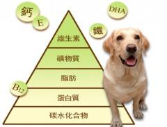 狗狗一天所需的營養素必需量
