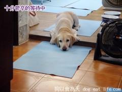 狗狗補充鈣質小點心『烤柳葉魚』