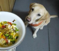 自製愛犬手工鮮食快滿5年的小小感想!